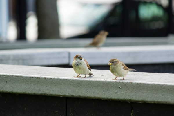 two birds on standing